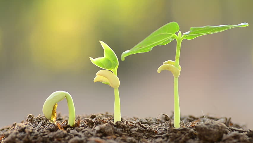 plants and seeds - 852×480