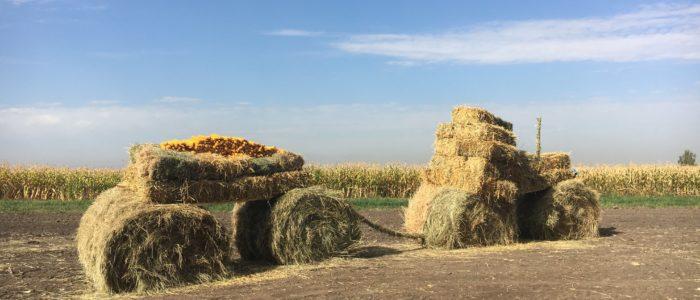 День поля в Саймасае