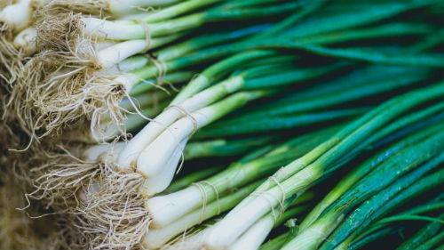 Как вырастить лук в Казахстане?