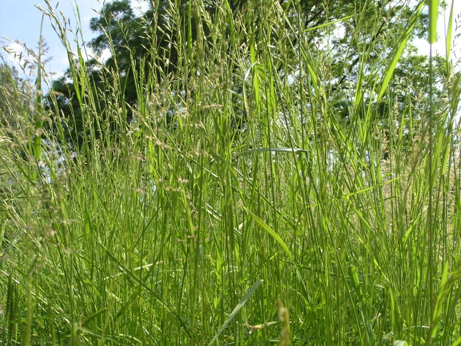 В Атырауской области аграрии запланировали посевную на территории в 9222 га