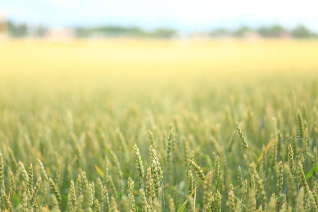 В Акмолинской области зерновой сев в 2020 году составит 4,4 млн. гектаров