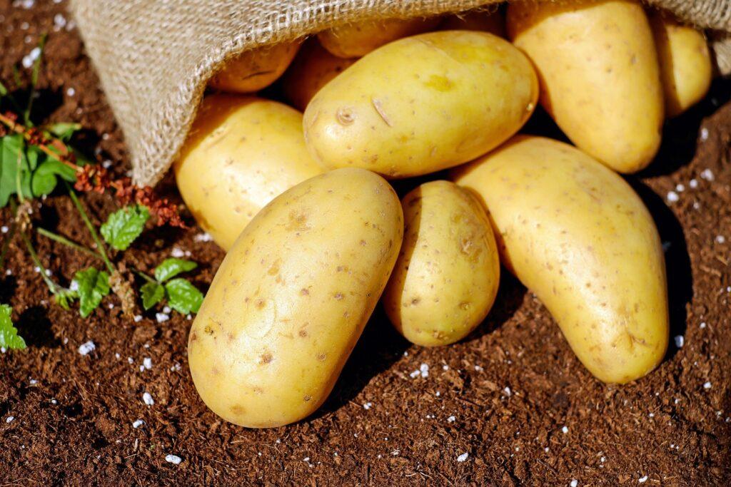 Картофель в Казахстане