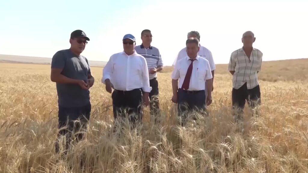 Израильская технология для выращивания овощей в Туркестанской области