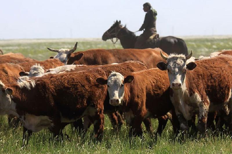 Увеличилось поголовье скота и продукция животноводства