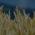 [:ru]Проблемы и технологии использования минеральных удобрений в Северном Казахстане[:kk]Солтүстік Қазақстанда минералды тыңайтқыштарды қолданудың проблемалары мен технологиялары[:]