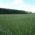 [:ru]Многолетние травы[:]